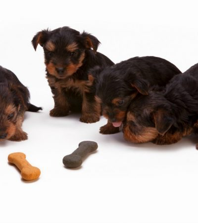 Dog Care 101: Doing Right By Your Dynamic Doggy