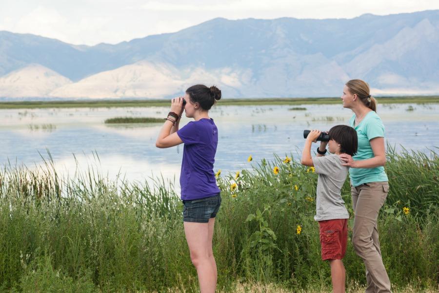 Bear River Migratory Bird Refuge in Box Elder County