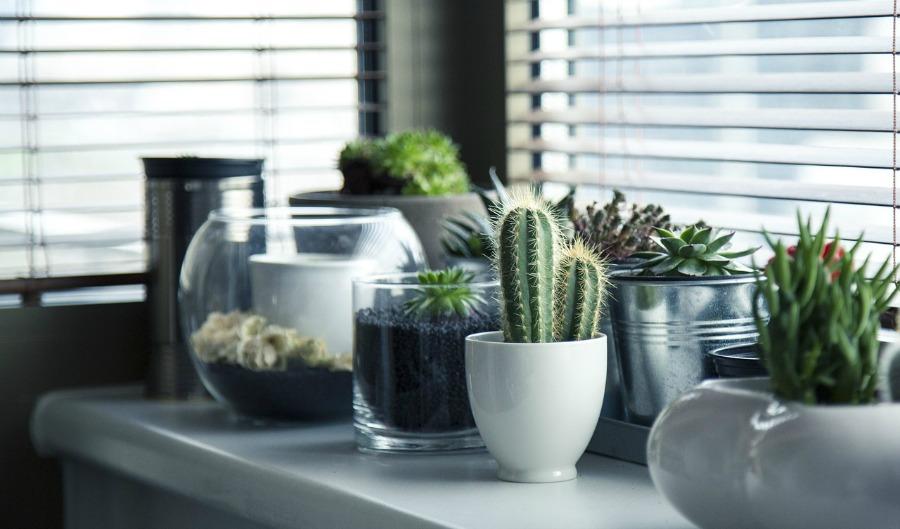 interior design add plants
