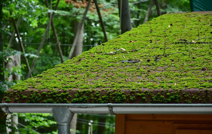 how to remove roof moss without causing damage