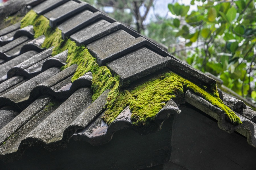 simple ways to remove roof moss