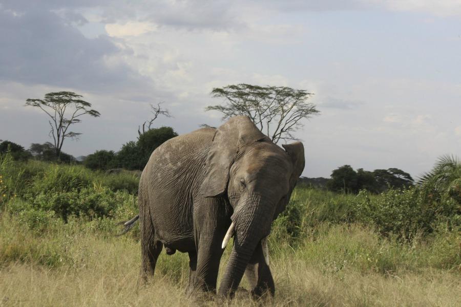 Mojhi african safari