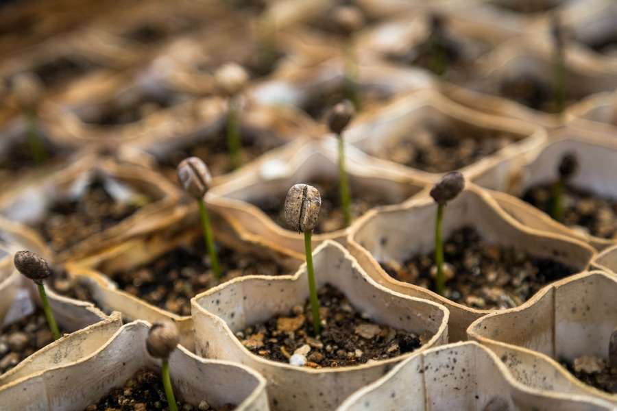 Starting seedlings when Planting Vegetable Seeds