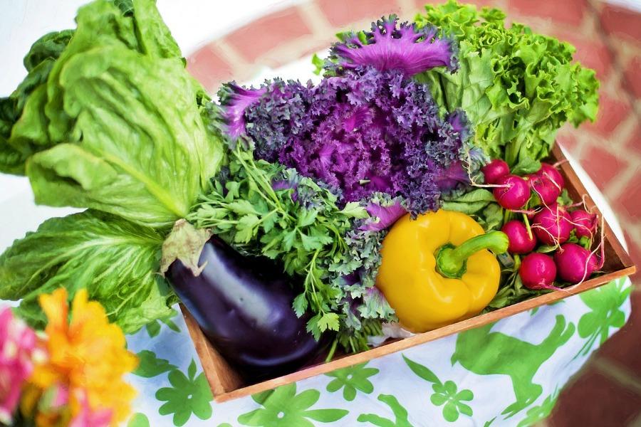 Planting Vegetable Seeds