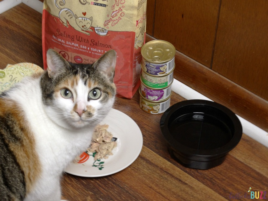 DIY Cat Food Plate Sookie