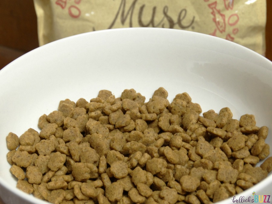 DIY Cat Food Plate Purina Muse Dry Food
