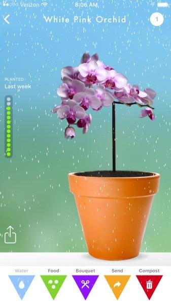 flowerling app watering my flower
