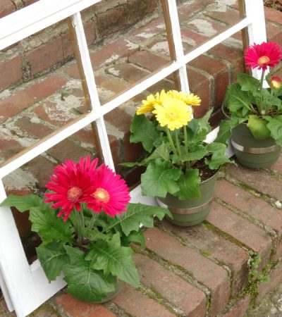Windex® Foaming Glass Cleaner + DIY Upcycled Window Flower Planter #WindexSparkle