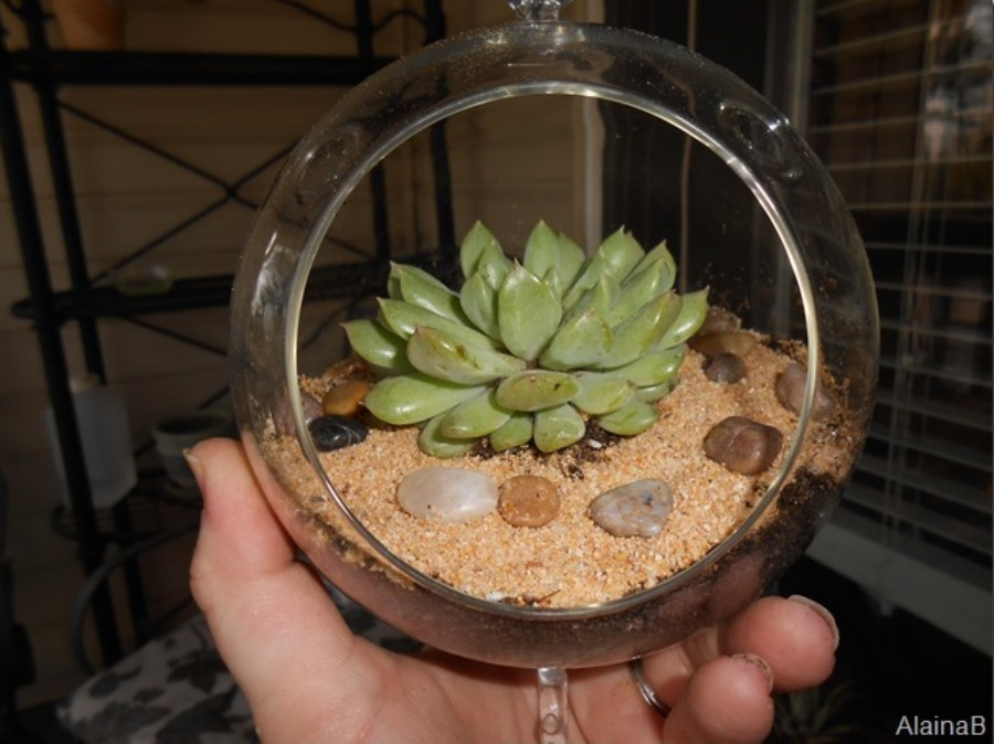 DIY hanging globe terrarium container gardening idea