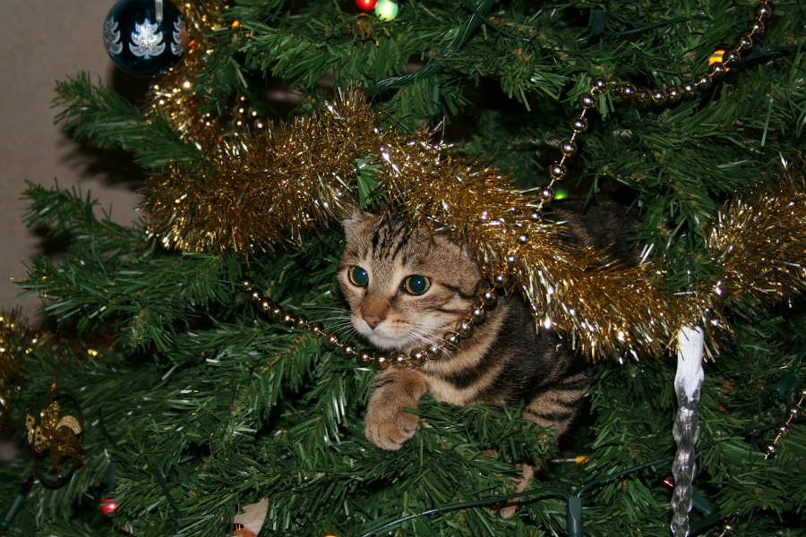 picking the perfect Christmas tree keep pets away