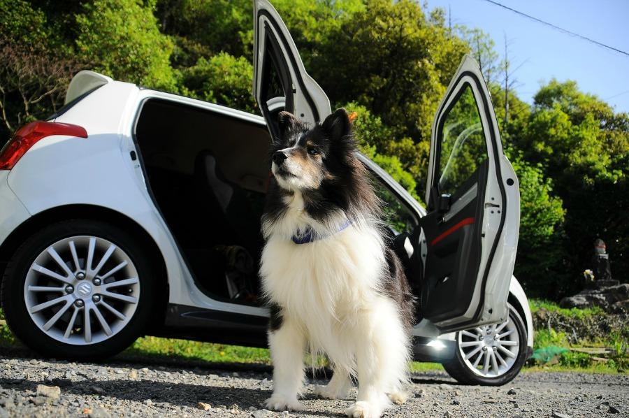 dog sitting by car
