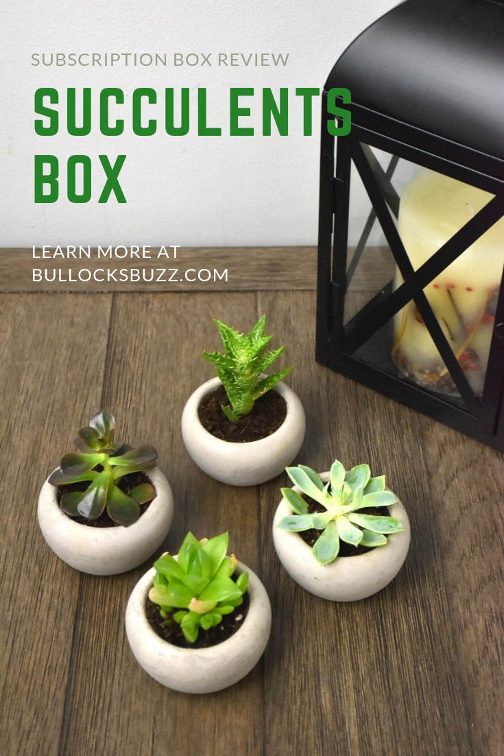 With Succulents Box, you can quickly and affordably collect an amazing selection of healthy, gorgeous succulents.