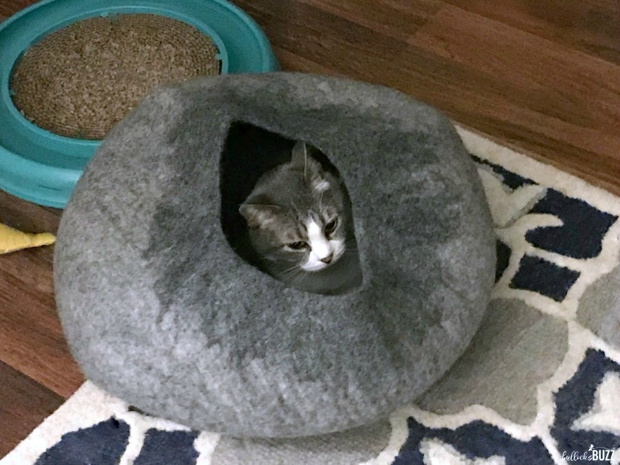 cat laying inside cat cave