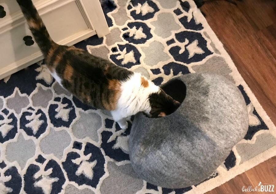 cat looking in cat cave