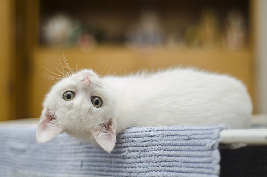 tips on introducing a kitten to your home