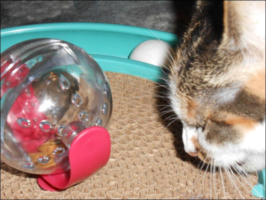 cat food ball with treats