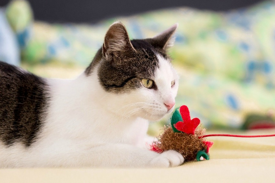 cat toys for cats