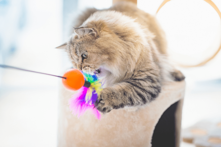 cat playing with cat toys