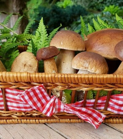 how to grow mushrooms in your backyard