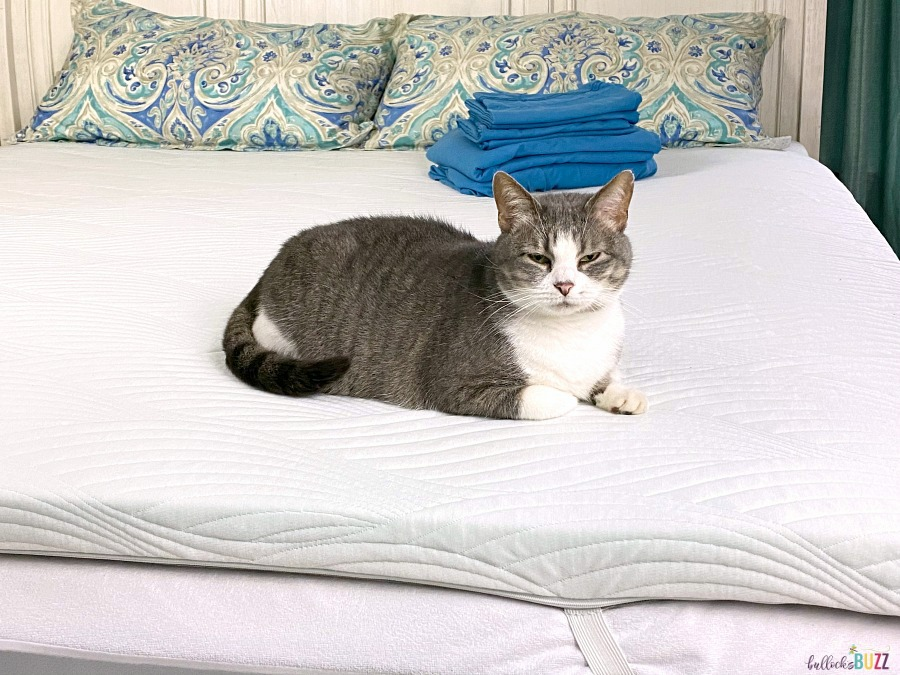 cat sitting on nest bedding cooling topper