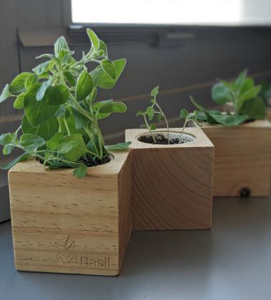 Sprigbox with grown herbs