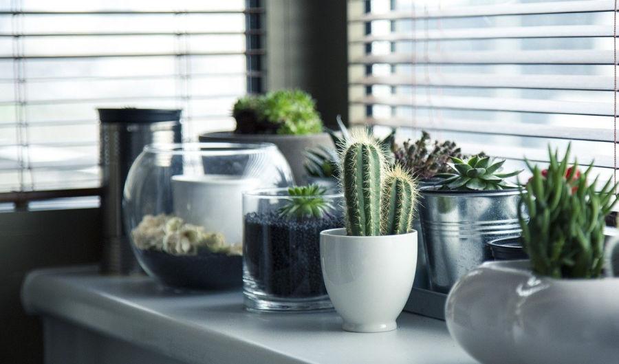 plants as DIY home decor
