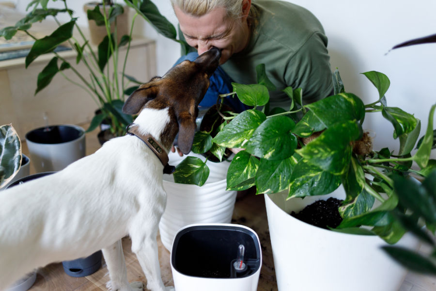 enjoy pet-friendly houseplants like the ones this dog is helping tis human plant