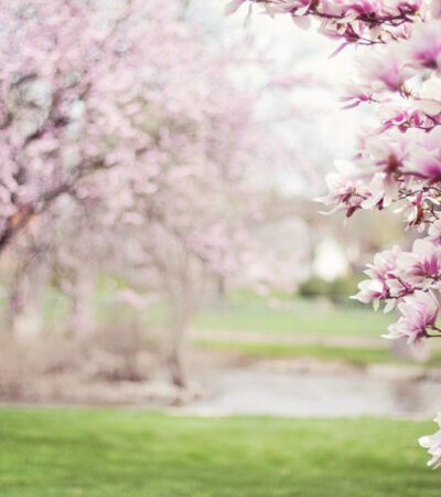 After being cooped up for way too long, I think we are all ready to enjoy a fresh, new season. Here are some springtime tips for families that'll help ensure you have a season where every aspect of your life feels like it's in full bloom!