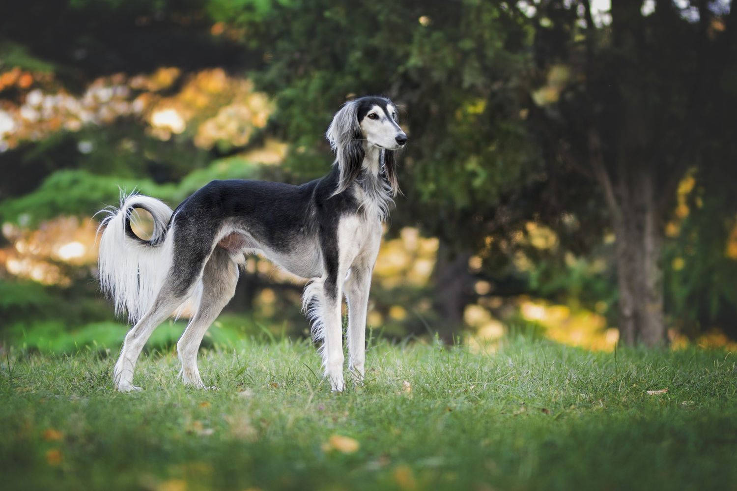 Thinking about adopting a retired greyhound? Here are some things you need to consider before you make your decision.