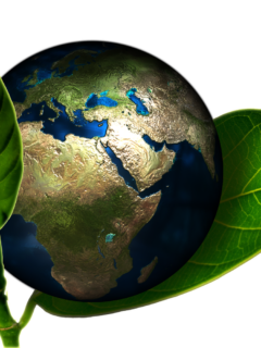 the planet Earth nestled between two leaves to signify the importance of practicing everyday sustainable habits to protect the planet