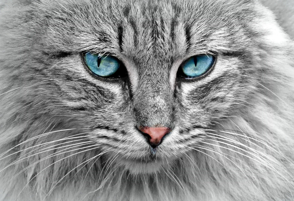 How often should you take your cat to the vet