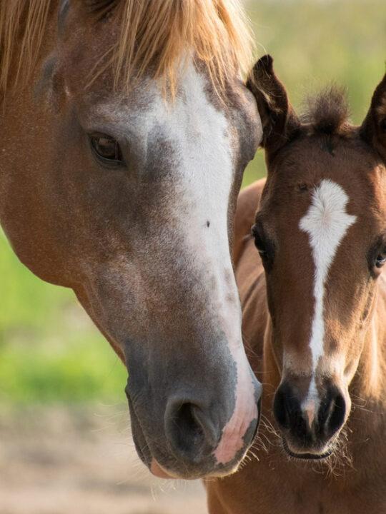 5 horse tack essentials