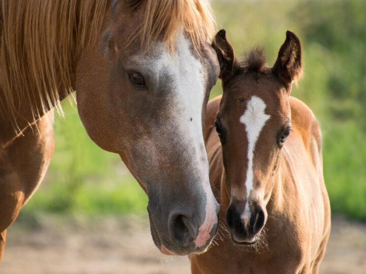 horse tack essentials for a horse and foal like these
