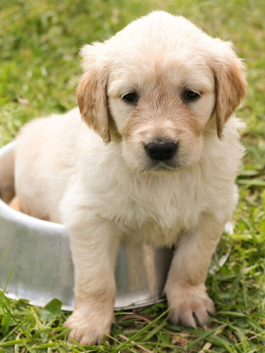 tips on keeping your new dog healthy and happy