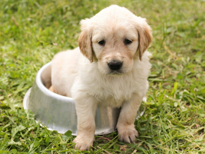 tips on keeping your new dog healthy at home
